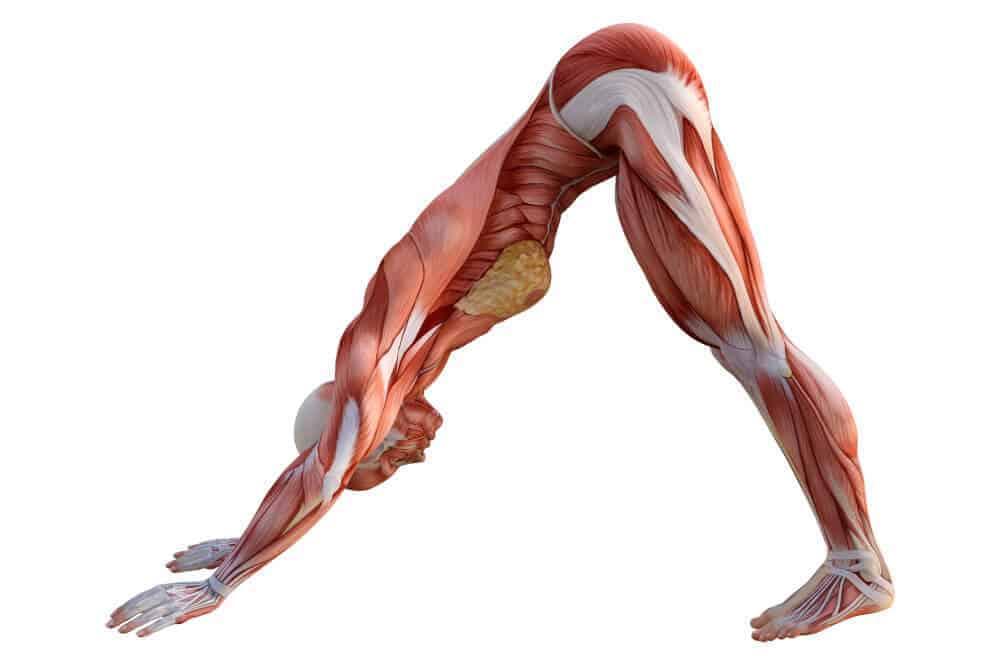 Anatomia experiencial, con Gopala